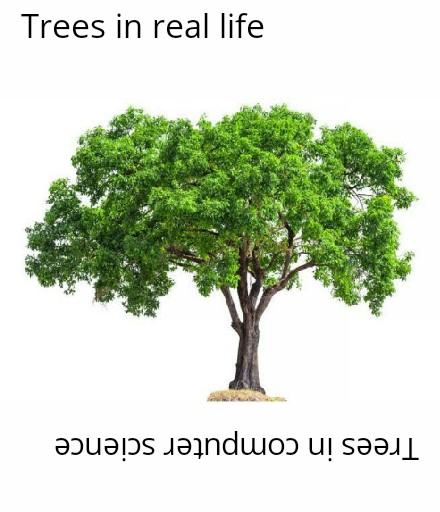 A tree is narrow at the top and wide at the bottom - Our professor. | trees-memes, ide-memes, bot-memes | ProgrammerHumor.io