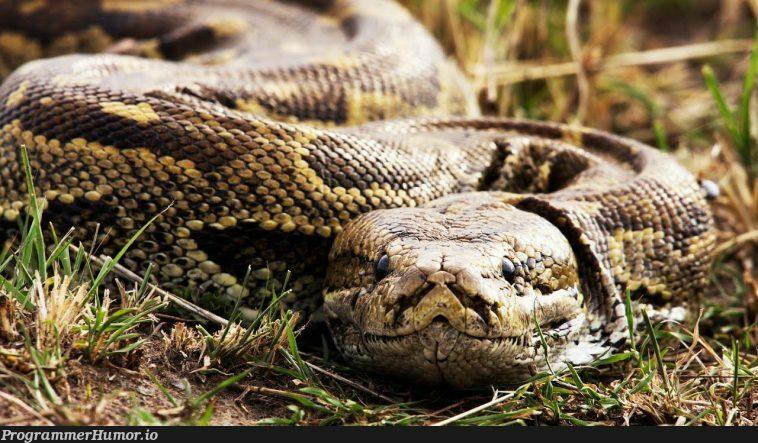 Mods are asleep, upvote python | python-memes | ProgrammerHumor.io