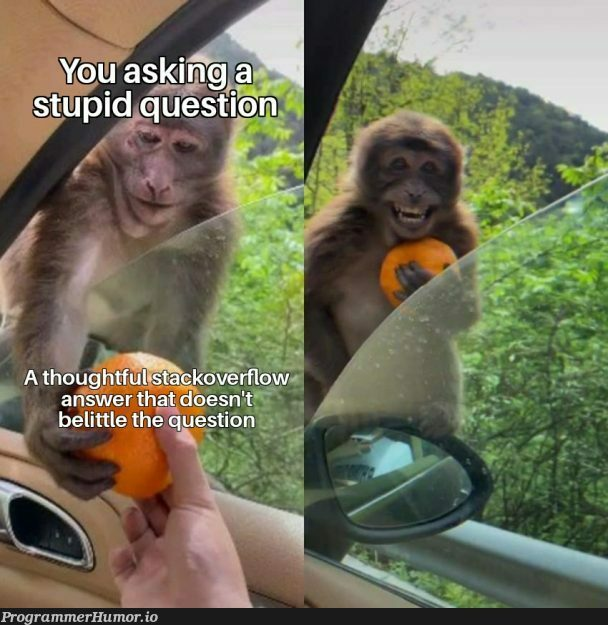 It's ok to ask a stupid question | stack-memes | ProgrammerHumor.io