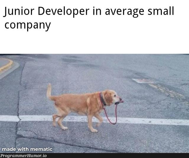 Is It only my experience? | developer-memes, IT-memes | ProgrammerHumor.io