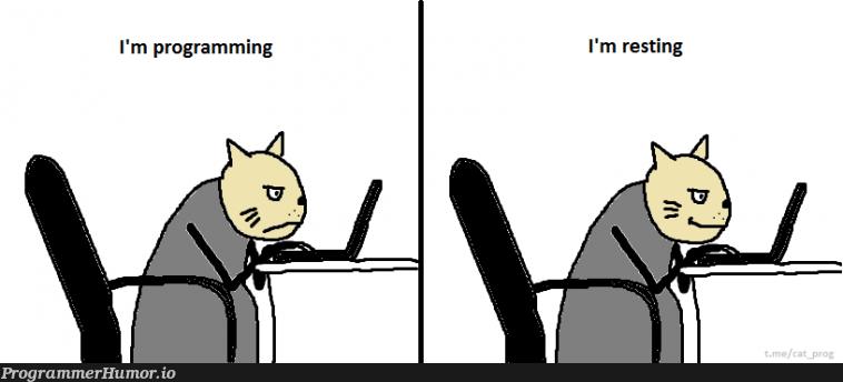 this is my life   programming-memes, program-memes, rest-memes   ProgrammerHumor.io
