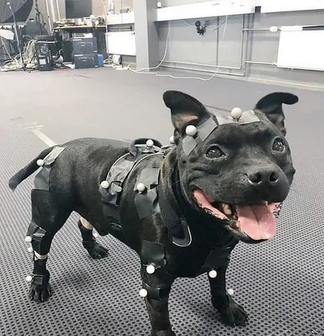 Meet the hardest working game developer in the industry. This Doggo is responsible for the motion capture used to model dogs in several different games.   developer-memes, try-memes   ProgrammerHumor.io